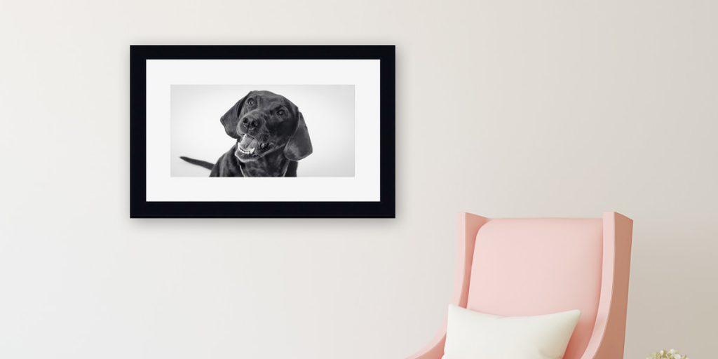 Framed portrait of a dog made near Houston