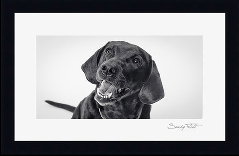 CLassic black and white portrait of a dog