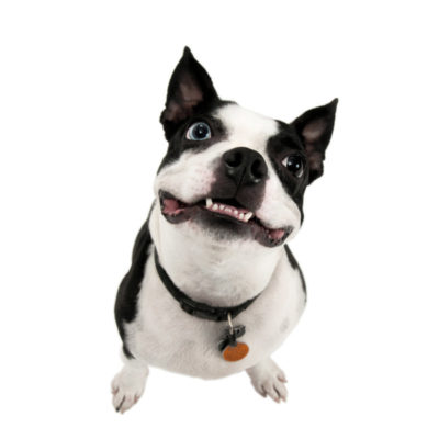 Dog portrait made near Katy, Tx by Flint Photography