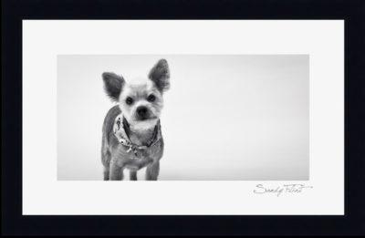 Pet portraits of dog by Sandy Flint