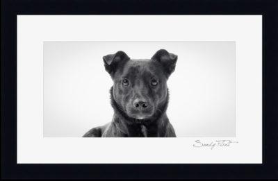 Framed Pet Portraits by pet photographer Sandy Flint