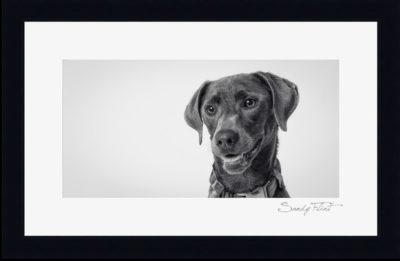 Fine art dog portrait made near Houston, Tx