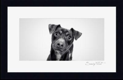 Pet portraits made by Flint Photography near Houston, Tx